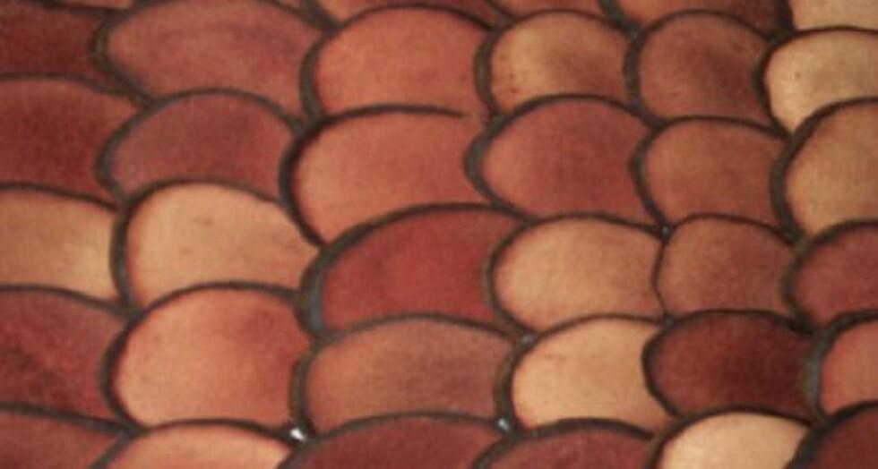 deer antler velvet pierdere de grăsime afinele ajută la arderea grăsimilor