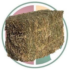 Premium Meadow Hay