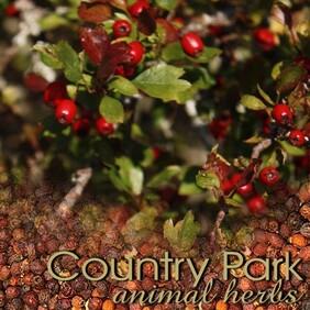 Country Park Hawthorn Berries 1kg