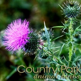 Country Park St MarysThistle 1kg
