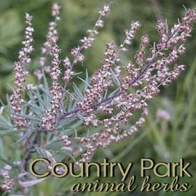 Country Park Mugwort Powder 1kg